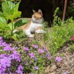 「世界ネコ歩き 日光那須塩原」のロケ地へ行ってきた