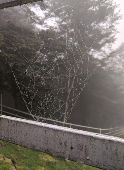 雨の日の蜘蛛の巣